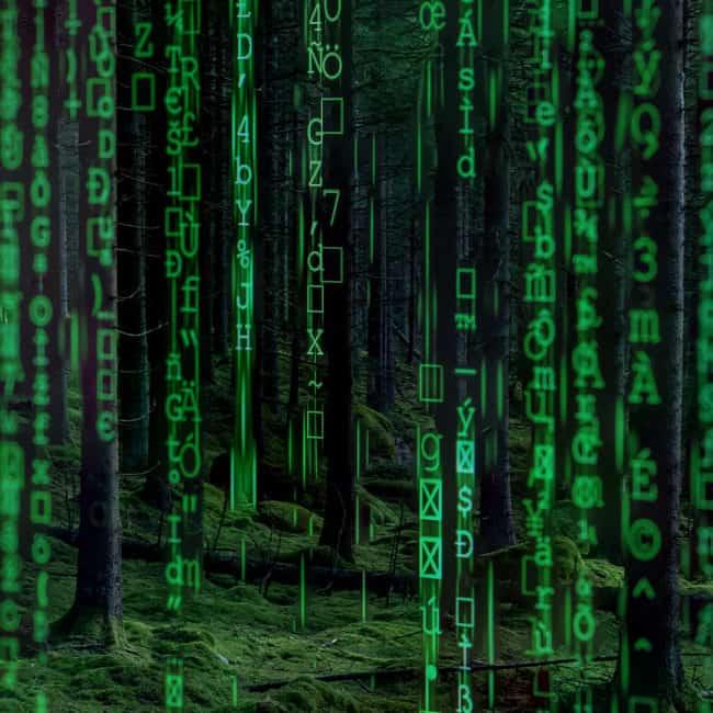 Dataforest2